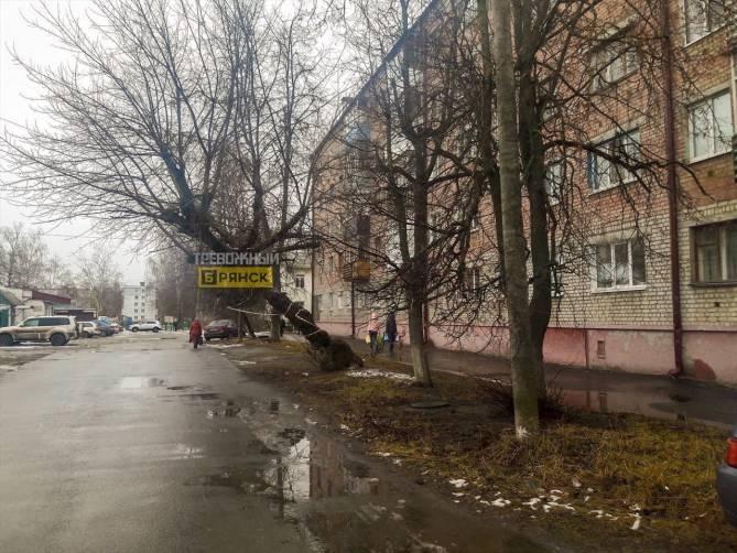 В Брянске жителей улицы Энгельса подстерегает опасное дерево