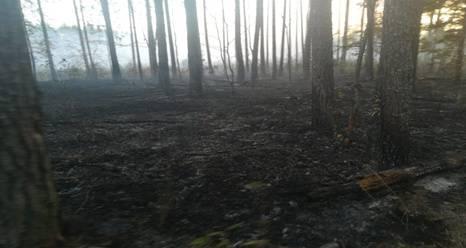 В Брянском районе потушили лесной пожар на площади 2,4 гектара