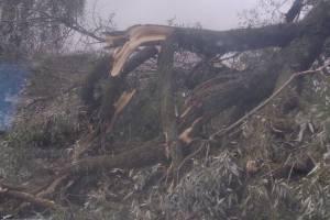 В Суземке упавшее дерево задело дом