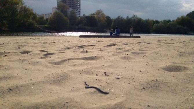 В Брянске на центральном пляже сняли на видео змею