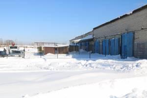 Приют для бродячих животных обещают открыть в Брянске в марте