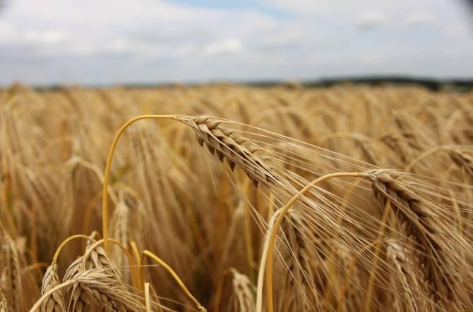 В Брянской области вернули в сельхозоборот заросший участок