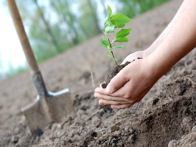 На Брянщине пройдет массовая акция высадки деревьев