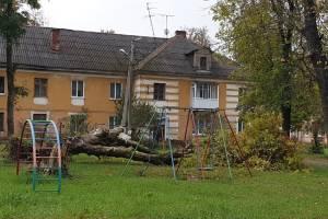 В Белых Берегах на детскую площадку рухнуло дерево