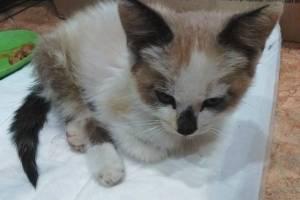В Погаре выбросили на улицу покалеченного котенка