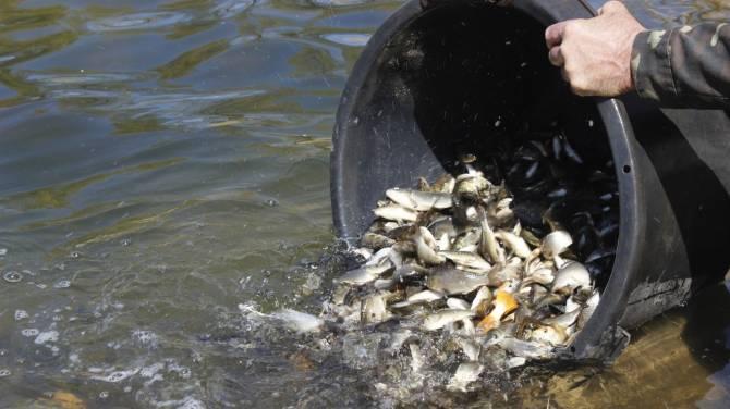 В Карачевском районе собирают деньги на зарыбление озера