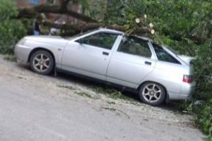 В Брянске коммунальщики повалили спиленное дерево на ВАЗ
