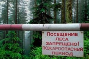 Брянцам запретили ходить в лес до 5 сентября
