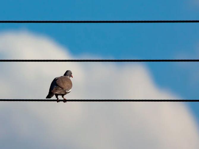 Неосторожная птица оставила без света жителей Дятьково
