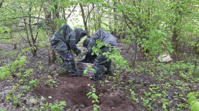 В лесу под Выгоничами нашли 29 килограммов ртути
