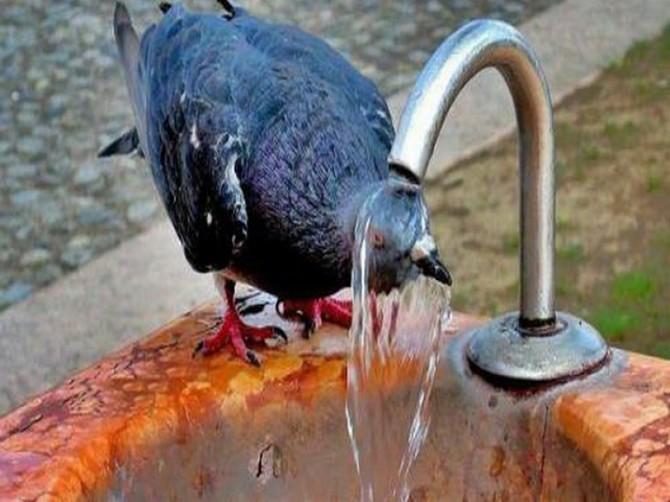 В Брянской области во вторник обещают тепло и без дождей