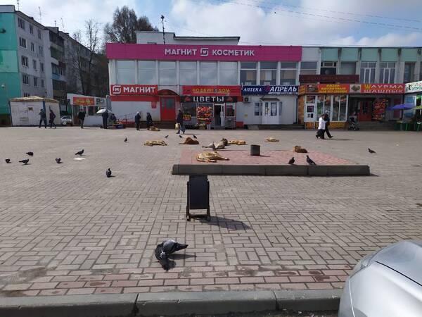 В Брянске стая бродячих собак захватила площадь возле «Магнита»
