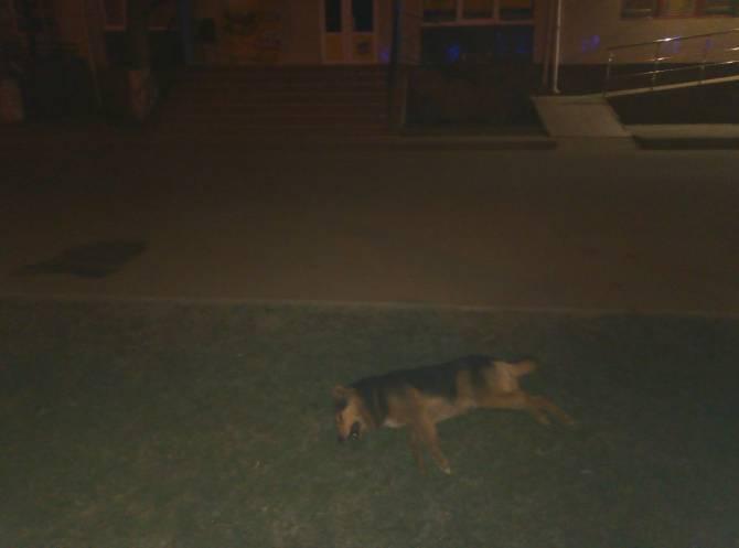 В Брянске сообщили об отравлении бродячих собак