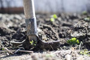 В Брянской области вырос спрос на участки сельхозназначения
