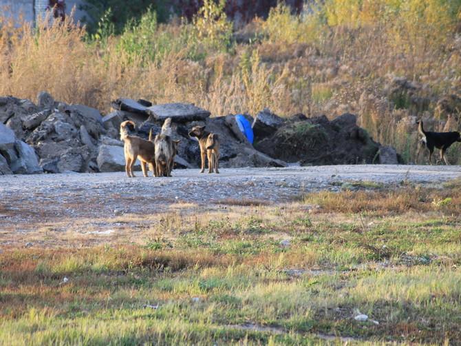 В Брянске бродячие собаки за год покусали почти 700 горожан