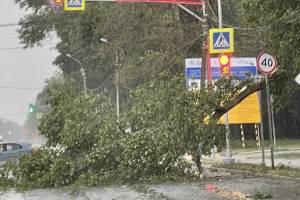 В Брянске у гипермаркета «Линия» рухнуло дерево