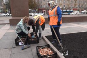 В Брянске высадят около 35 тысяч тюльпанов
