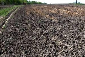 Экспорт продовольствия на Брянщине в 2021 году составил 29,6 млн долларов