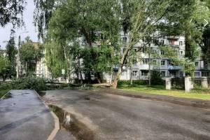 В Брянске на улице Кольцова рухнувшее дерево перегородило дорогу