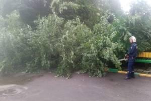 В Брянске ураганный ветер повалил 12 деревьев