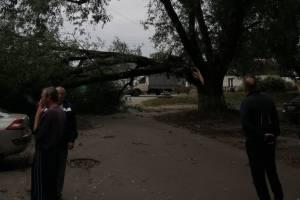 В Брянске на Карачиже ветром сломало огромное дерево