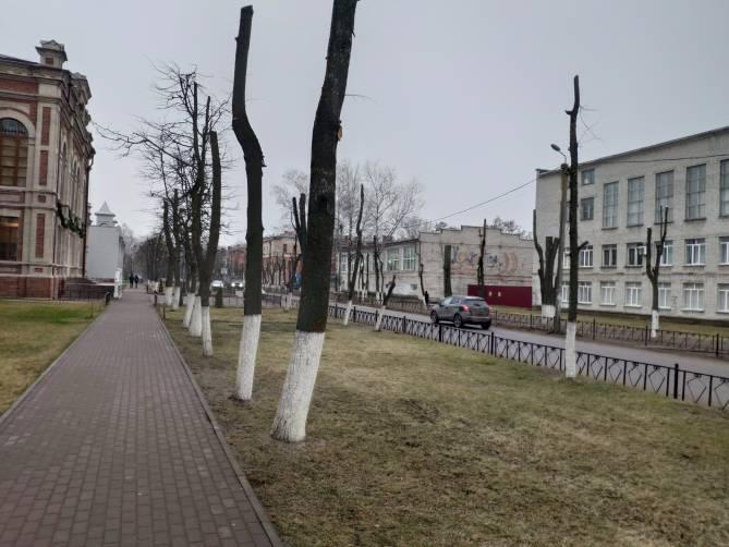 В Брянске состоится лекция о вреде кронирования деревьев
