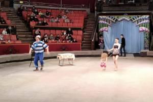 Брянский цирк начал новый сезон с бесплатного спектакля для медиков