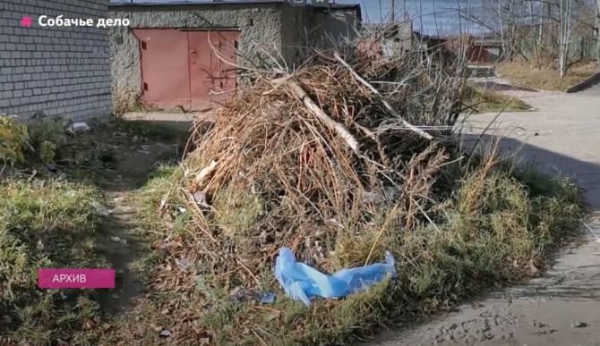 «Колбасу не тронули, а человека сожрали»: собаки напали на женщину в Брянске