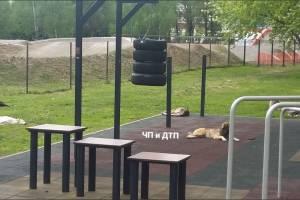 В Брянске опустевший Курган Бессмертия захватила стая собак
