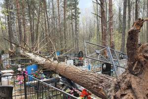 В Брянске из-за сильного ветра на кладбище упало дерево