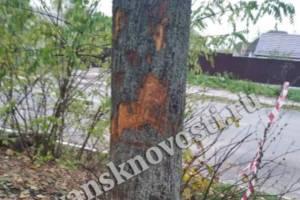 В новозыбковском парке смертельно ранили деревья