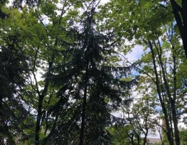 В Брянске просят спасти забравшегося на дерево котенка