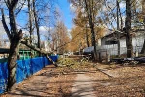 В Брянске возле школы №60 на дорогу рухнуло дерево