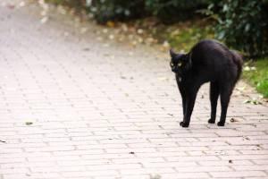 Брянские зоозащитники опасаются за судьбу черных кошек в пятницу 13-го