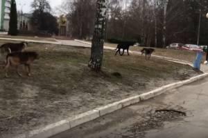Собаки захватили территорию у губернаторского дворца имени Гагарина в Брянске