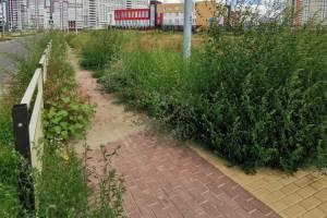 Брянцев ужаснула прогулочная зона на новой улице Грибачева