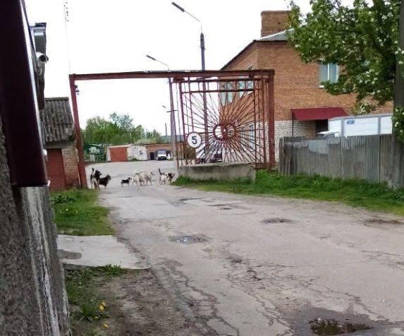 В Новозыбкове жителей улицы держит в страхе стая бездомных собак