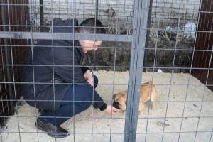 Главный инженер дорожного управления Брянска взял из приюта собаку