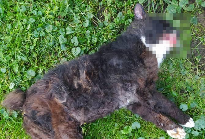 В Мглине водителя судебных приставов наказали за убитого кота