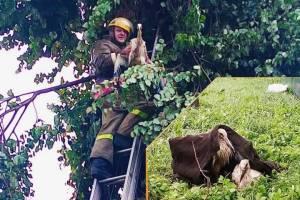 Брянские пожарные поделилось трогательными снимками спасённых животных