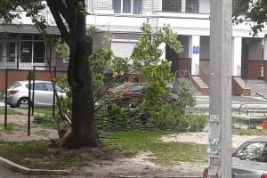 В Брянске ураганный ветер повалил дерево на детскую площадку