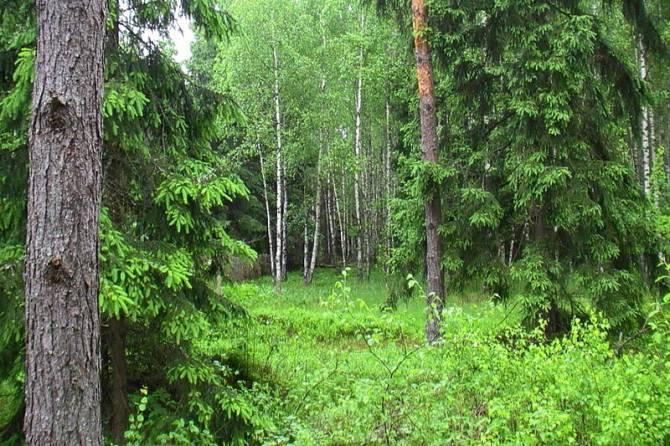 В Брянске «Чистая планета» помогла навести порядок в белобережском лесу