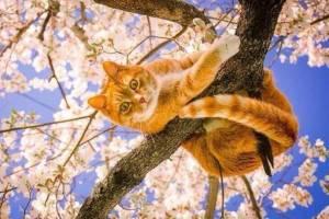 На Брянщине 19 апреля синоптики обещают +14ºC