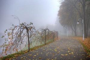 Брянскую область утром субботы накроет туман