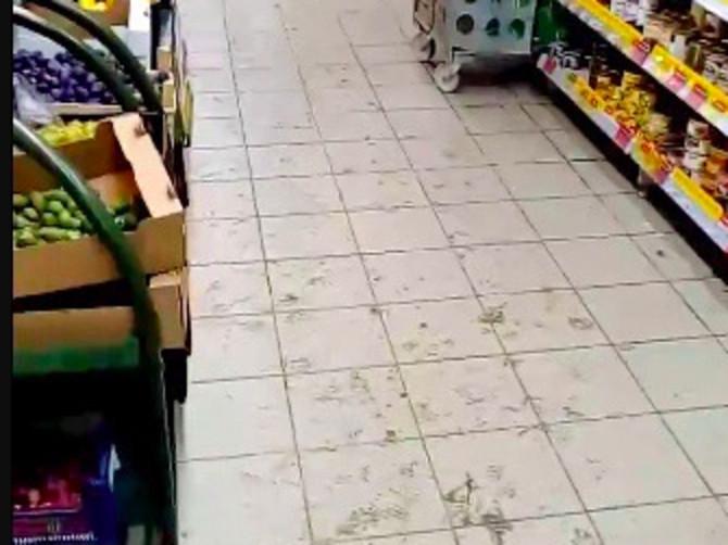 Брянцы пожаловались на свинарник в магазине «Магнит»