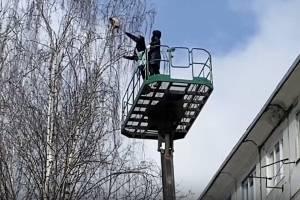 В Брянске спасли застрявшего на дереве котика
