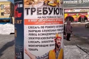 В Брянске на работу ищут Шариковых для отлова бродячих собак