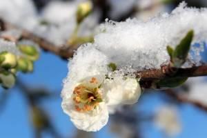 В Брянской области похолодает до -6 градусов