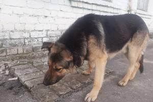 Брянцы пытаются спасти искалеченного живодерами пса