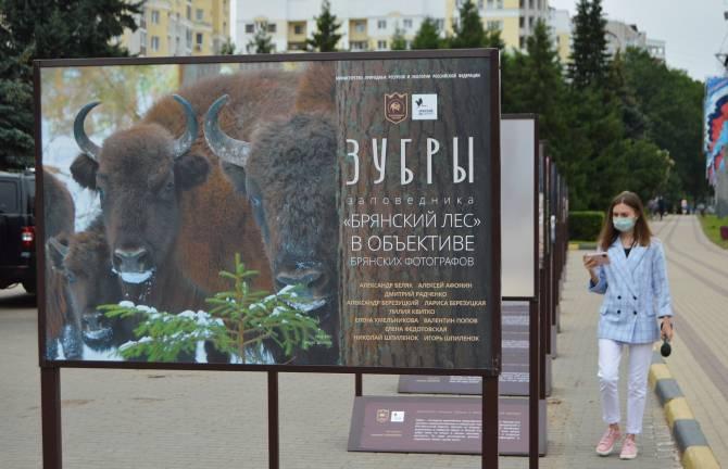 Брянцы смогут любоваться зубрами в центре города до конца лета